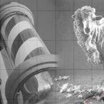 roosevelt-barbour-sheep-sm
