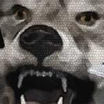 Cry-Wolf-Header2-600