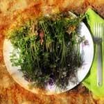 Eat-Weeds-thumb_proc